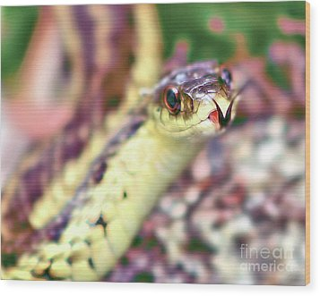 Wood Print featuring the photograph Slithering Snake With Forked Tongue by Debbie Stahre