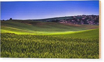 Sliver Of Sunlight On The Palouse Hills Wood Print by David Patterson