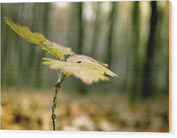 Small Branch With Yellow Leafs Close-up Wood Print
