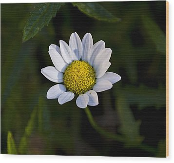 Small Daisy Wood Print by Svetlana Sewell