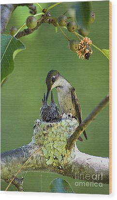 Wood Print featuring the photograph Small Family - D009336 by Daniel Dempster