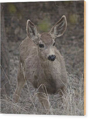 Small Fawn In Tombstone Wood Print by Colleen Cornelius