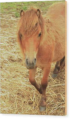 Small Horse Large Beauty Wood Print by Karol Livote