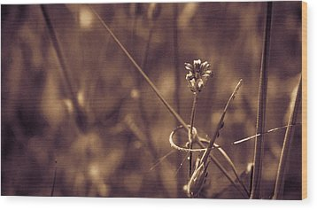 Wood Print featuring the photograph Small by Lora Lee Chapman