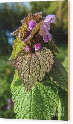 Small Mauve Flowers 7 Wood Print by Jean Bernard Roussilhe