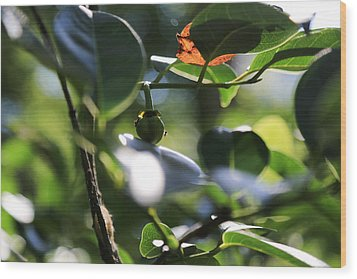 Small Nature's Beauty Wood Print by Christopher L Thomley