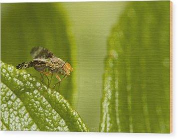 Small Orange Fly Wood Print by Jouko Mikkola