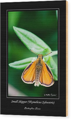 Small Skipper   Thymelicus Sylvestris Wood Print by Mathias Rousseau