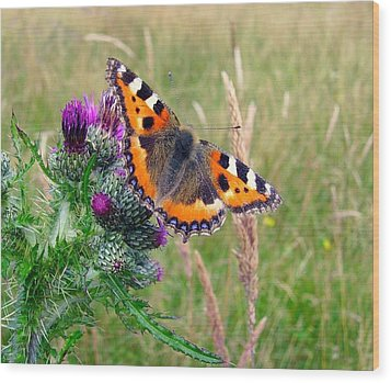 Small Tortoiseshell Butterfly Wood Print by Photo by Suzanne Rowcliffe (suzanne.rowcliffe@gmail.com)