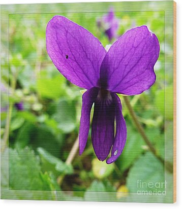 Small Violet Flower Wood Print by Jean Bernard Roussilhe