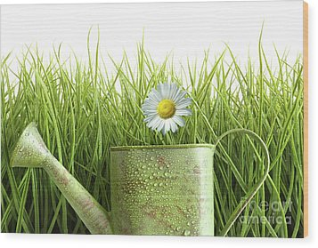 Small Watering Can With Tall Grass Against White Wood Print