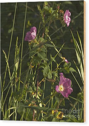 Wood Print featuring the photograph Smelling The Wild Royal Roses by Daniel Hebard