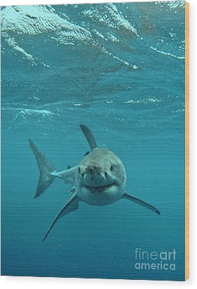 Smiley Shark Wood Print by Crystal Beckmann