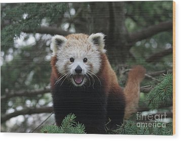 Smiling Red Panda #2 Wood Print