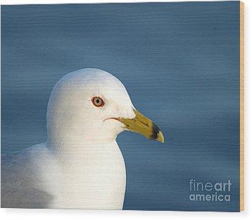 Smiling Seagull Wood Print