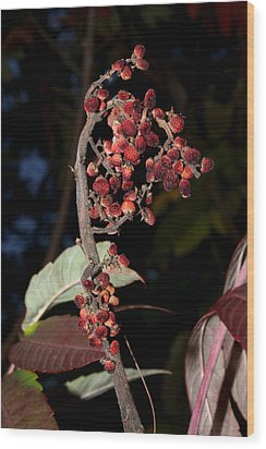 Smooth Sumac Flower Wood Print by Robert Morin