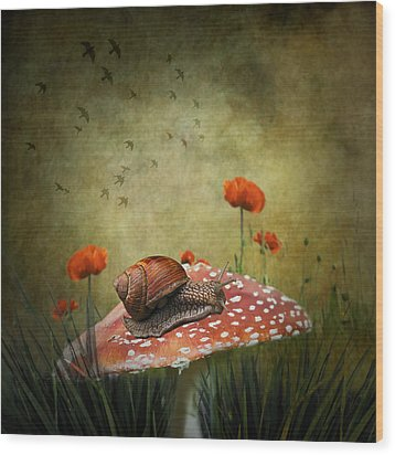 Snail Pace Wood Print by Ian Barber