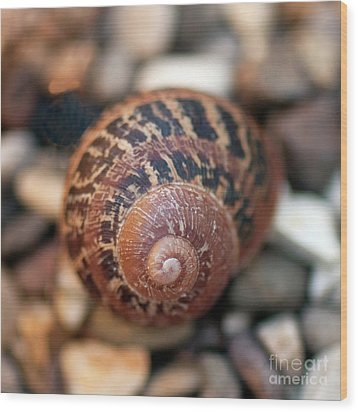 Snail Shell Wood Print
