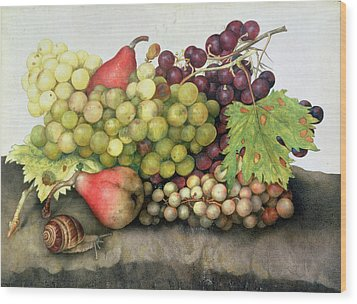 Snail With Grapes And Pears Wood Print by Giovanna Garzoni