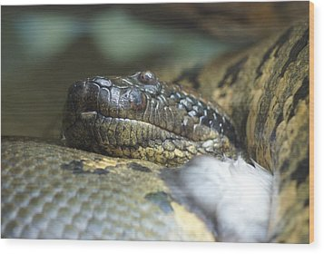 Wood Print featuring the photograph Snake by Heidi Poulin