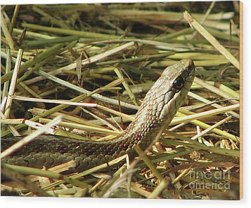 Snake In The Grass Wood Print by Deborah Johnson