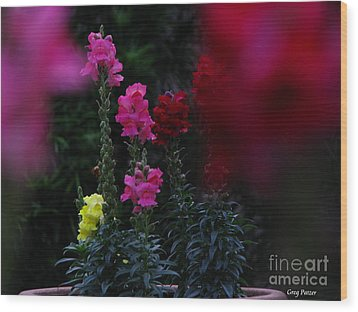 Snapdragon Wood Print by Greg Patzer
