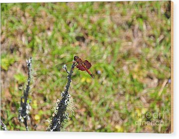 Wood Print featuring the photograph Shimmering Saddlebags by Al Powell Photography USA