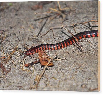 Wood Print featuring the photograph Snazzy Snake by Al Powell Photography USA
