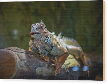 Snoozing Iguana Wood Print