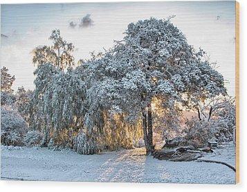 Snow At Sunrise 1 Wood Print