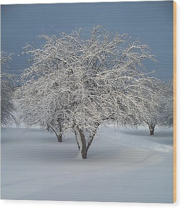 Snow-covered Apple Tree Wood Print by Erica Carlson
