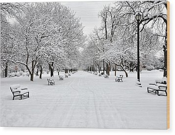 Snow Covered Benches And Trees In Washington Park Wood Print by Shobeir Ansari