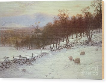 Snow Covered Fields With Sheep Wood Print by Joseph Farquharson