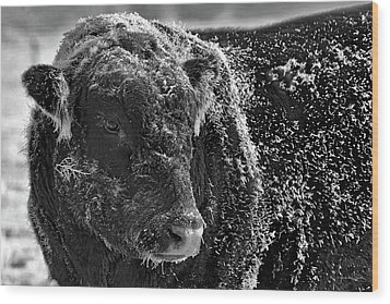 Snow Covered Ice Bull Wood Print