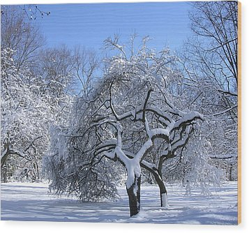 Wood Print featuring the photograph Snow-covered Sunlit Apple Trees by Byron Varvarigos
