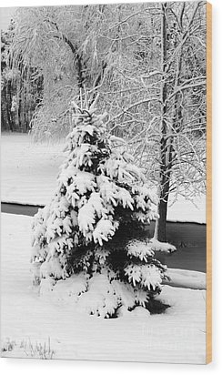 Snow Covered Trees Wood Print by Kathleen Struckle
