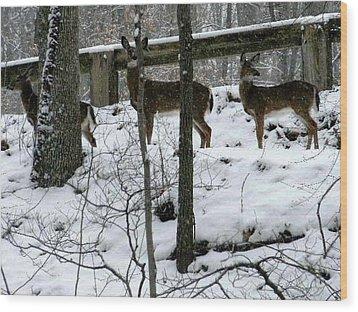 Snow Deer - Rock Creek Park Washington Dc Wood Print