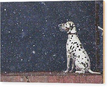 Snow Dog Wood Print by Yury Bashkin