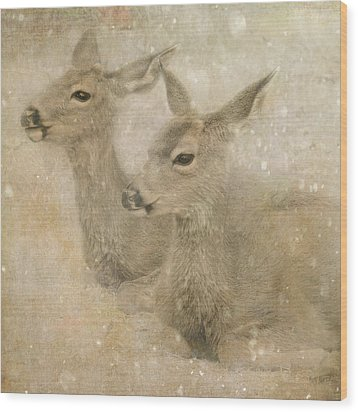 Snow Fawns Wood Print by Sally Banfill