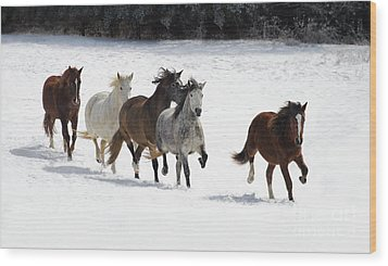 Snow Gallop Wood Print