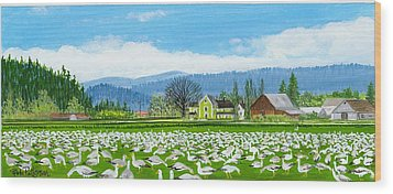 Snow Geese And A Farm House Wood Print by Bob Patterson