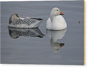 Snow Geese At Bosque Wood Print