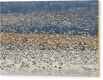 Wood Print featuring the photograph Snow Geese At Willow Point by Lois Bryan