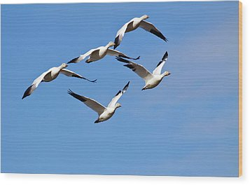 Wood Print featuring the photograph Snow Geese Flormation by Elvira Butler