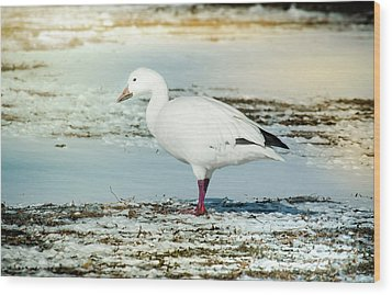 Wood Print featuring the photograph Snow Goose - Frozen Field by Robert Frederick