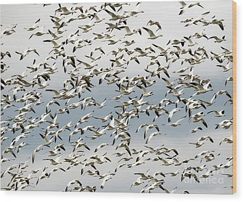 Wood Print featuring the photograph Snow Goose Storm by Mike Dawson