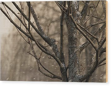 Snow In The Air - Wood Print