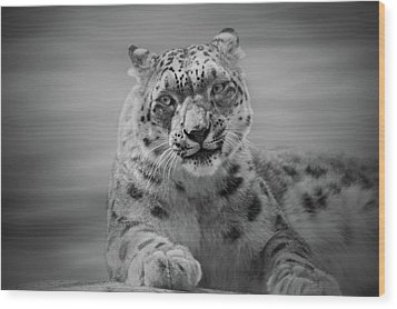 Wood Print featuring the photograph Snow Leopard  Bw by Sandy Keeton
