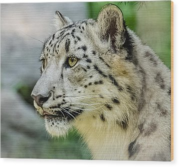 Snow Leopard Portrait Wood Print by Yeates Photography