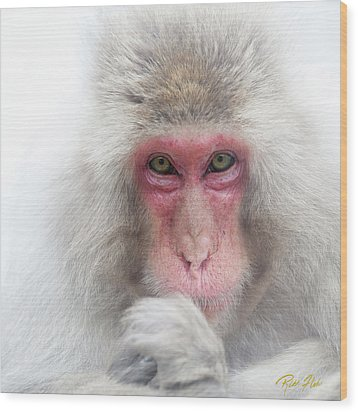 Wood Print featuring the photograph Snow Monkey Consideration by Rikk Flohr